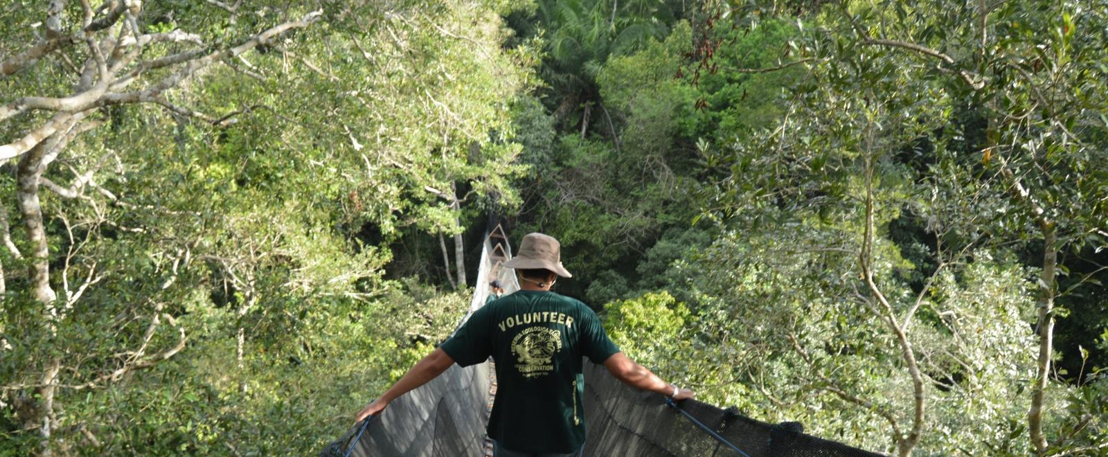 Projects Abroad vrijwilligers ervaren het Amazone regenwoud vanop de hoogste brug in Zuid-Amerika.